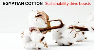 Egyptian cotton ; Sustainability drive boosts