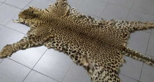 THE VALUE OF ANIMAL SKINS IN AFRICA