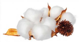 200 new organisations join Better Cotton Initiative