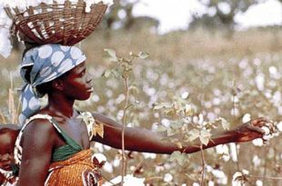 Zimbabwe, Brazil sign agreement on cotton production
