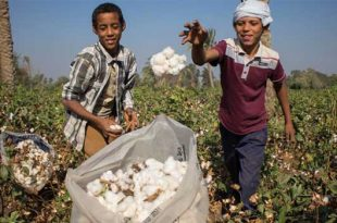 Egyptian Cotton & Textile Industries to merge subsidiaries