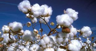 Pakistan withdraws all duties, taxes on cotton import