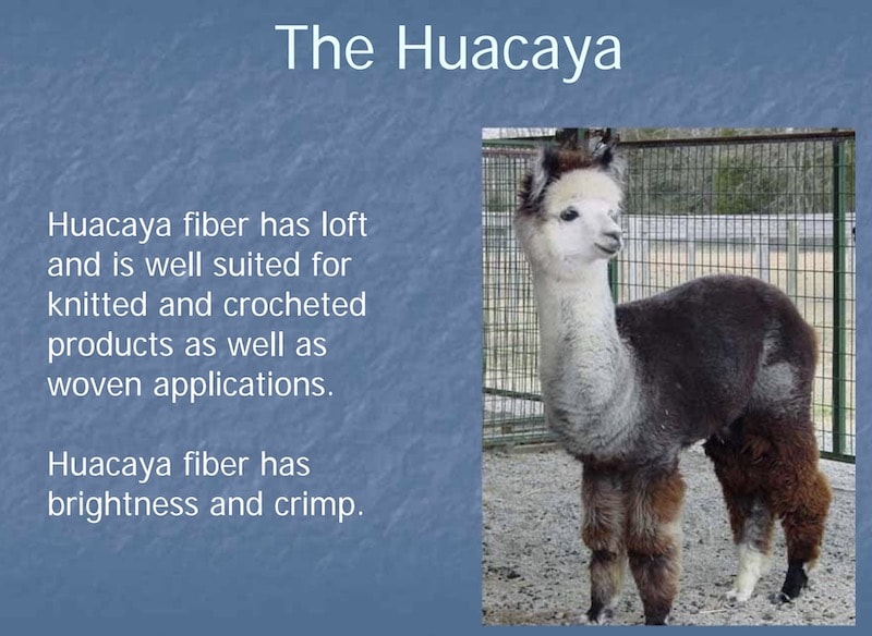 The Huacaya Alpaca fiber