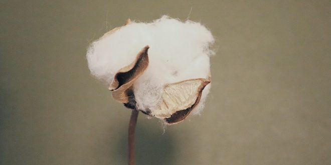 US Cotton