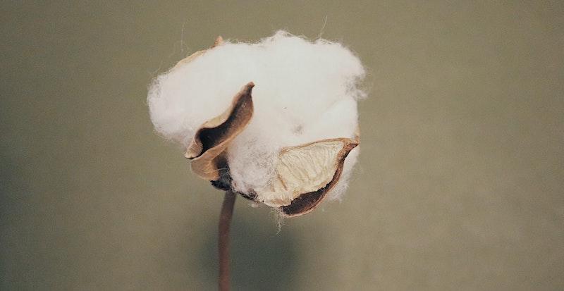 US Cotton